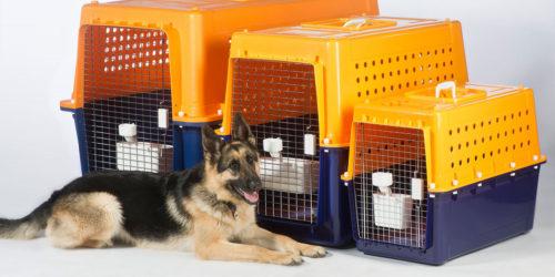 Evcil Hayvan Taşımacılığı